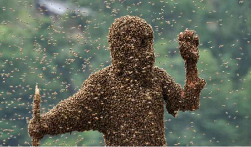 Казнь египетская: самые жуткие нашествия насекомых в истории