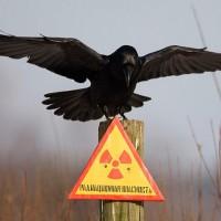 Что на самом деле произошло в Чернобыле: шведские ученые шокированы этими данными!
