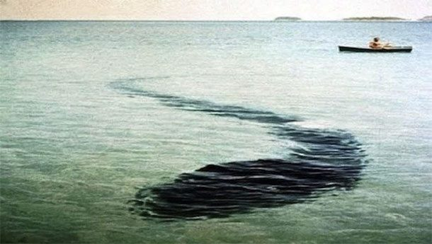 Подводный монстр Французский фотограф Робер Серрье совершал прогулку вокруг австралийского островка на небольшой лодке, когда с ужасом заметил огромную тень под водой. Выдержки Роберу хватило ровно на одну фотографию.