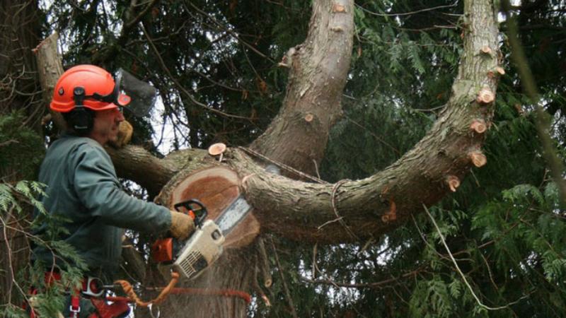 Лесозаготовщик Тяжелая и довольно неблагодарная работа. Лесорубам приходится трудиться в густой чаще, где просто невозможно за всем уследить. Опасно работать с топором и бензопилой, опасно не уследить за деревом, да и выматываться так ежедневно тоже очень опасно.