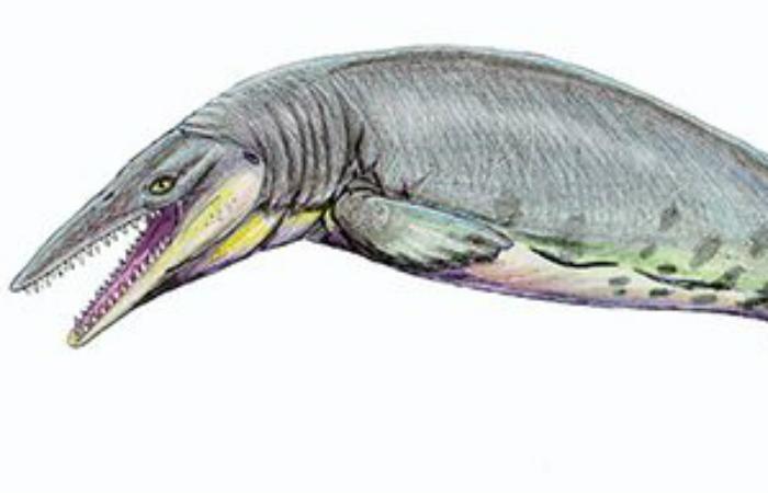 Тилозавр Этот хищник, выраставший до 15 метров в длину, долгое время оставался на вершине пищевой цепочки. Хитрый, быстрый и ловкий тилозавр без особого труда мог потягаться силами даже с другими хищниками и чаще всего выходил из кровавых схваток гордым победителем.