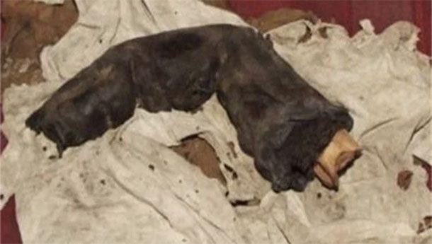 Гигантский палец Грегор Спарри, ирландский археолог, во время своей работы в Египте не брезговал сотрудничеством с черными копателями — грабителями гробниц. В 1985 году один из его постоянных поставщиков среди прочего принес огромный обрубок мумифицированного пальца, пообещав в следующий раз доставить и голову мумии-гиганта. Расхититель пирамид пропал уже на следующий день, а сам Спарри поспешил покинуть Египет.