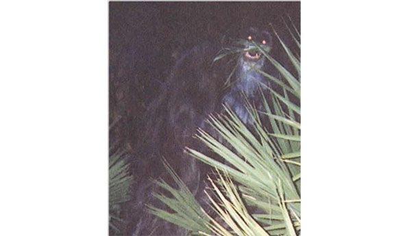 Обезьяна-убийца В 2000-м году аноним опубликовал эту загадочную фотографию обезьяны, якобы кочующей по Флориде. Полиция Сарасоты устроила масштабную облаву, однако никаких следов невиданной в природе обезьяны найдено не было.