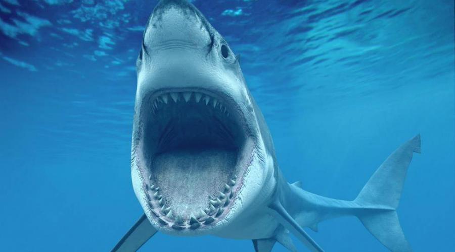 Акулы Уникальные и крайне необычные создания, появившиеся в океане еще 420 миллионов лет тому назад. Акула — идеальная машина убийства и нам очень повезло, что они когда-то решили не выбираться на сушу.