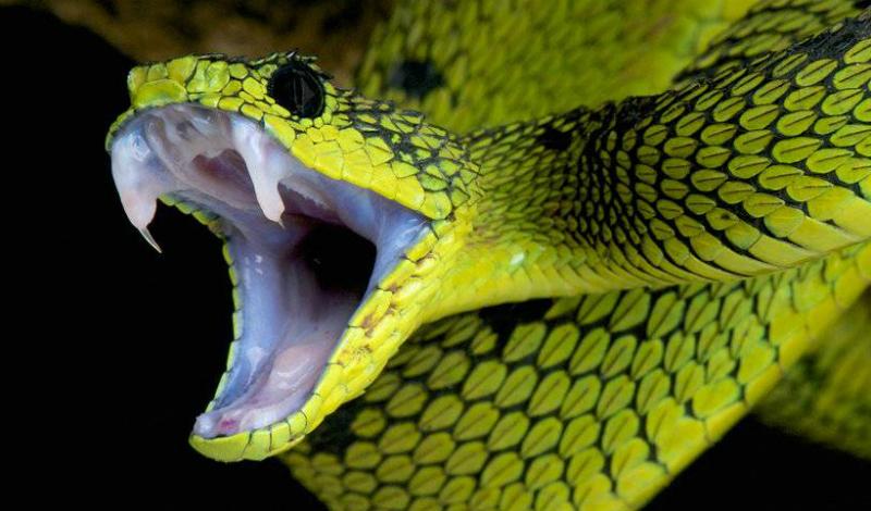 Свидание со змеями Не нужно паниковать при виде змеи. Люди слишком большие для змей, в качестве добычи они нас не рассматривают. Нападают только если напуганы — увидели змею, отходите в сторону медленно и мягко. Змея заползла в экипировку или палатку? Возьмите палку подлиннее и очень аккуратно сдвиньте ее в сторону.