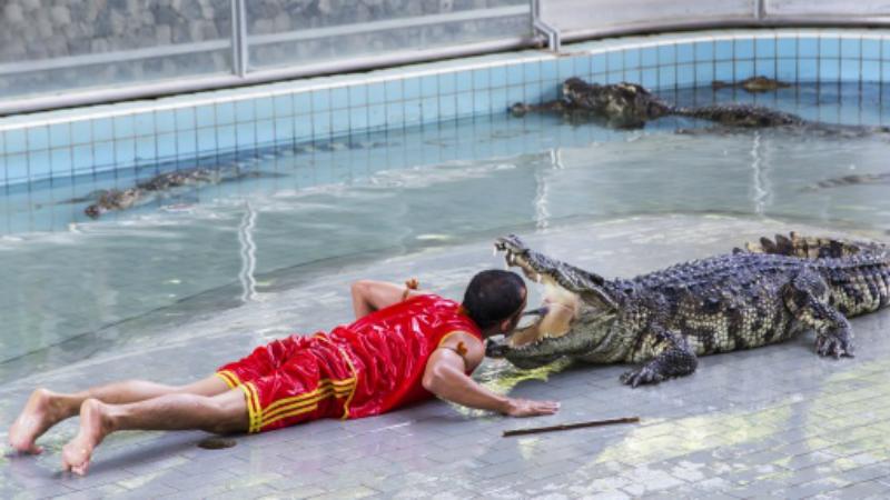 Рестлер с крокодилами Да, это реальная, пусть и не самая распространенная в мире профессия. Посмотреть на смельчаков, невозмутимо засовывающих голову в пасть крокодилам, можно в Азии — в зоопарке Бангкока такие шоу проводятся постоянно.