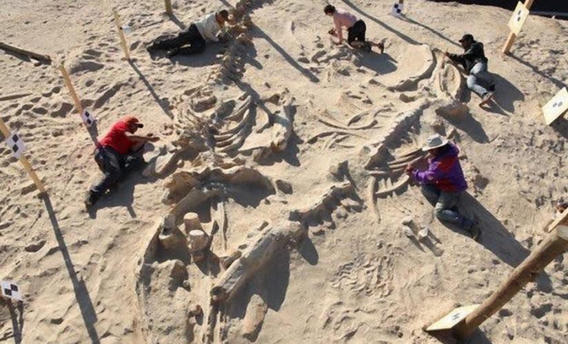 Кладбище китов Это удивительное открытие принадлежит группе дорожных рабочих, расширявших полотно шоссе в пустыне Атакама. Они наткнулись на самое настоящее кладбище доисторических китов: величественные останки, возраст которых превышал 75 миллионов лет, просто не могли оказаться в этой местности. Откуда они и отчего погибли?