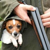 Плохой мальчик: собака пристрелила собственного хозяина, но тот успел сдать ее полиции
