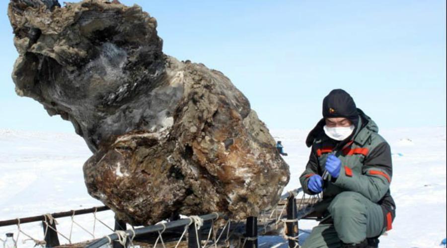 Мамонт Во льдах туша мамонта прекрасно сохранилась. Это и позволило ученым сделать удивительное открытие: оказывается, кровь мамонтов не замерзала даже при низкой (до -15 градусов Цельсия) температуре, что и помогало выживать животным на морозе.