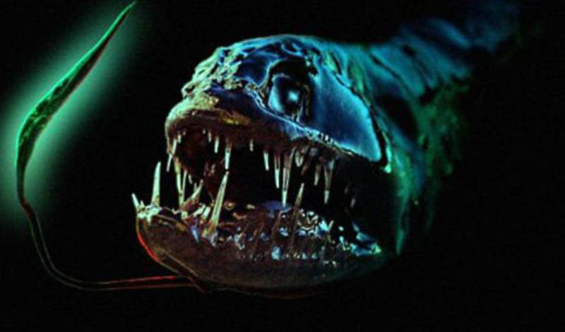 Длиннорогий саблезуб Длина этой рыбы всего 15 сантиметров, при этом она обладает клыками длиной в половину тела. Природе пришлось серьезно постараться, подыскивая место для клыков в пасти саблезуба: пазы в верхней челюсти так глубоки, что разделяют мозг рыбки на две части.