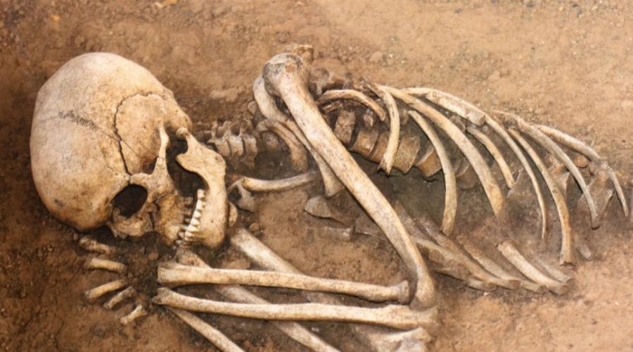 Французский товар Больше всего ценились скелеты созданные французскими мастерами. Дело в том, что только здесь специалисты использовали эфир, бензол и другие химикаты для отбеливания костей. Кроме того, французы знали, что производят товар на экспорт и потому старались больше, чем местные артели в той же Англии, или Европе.
