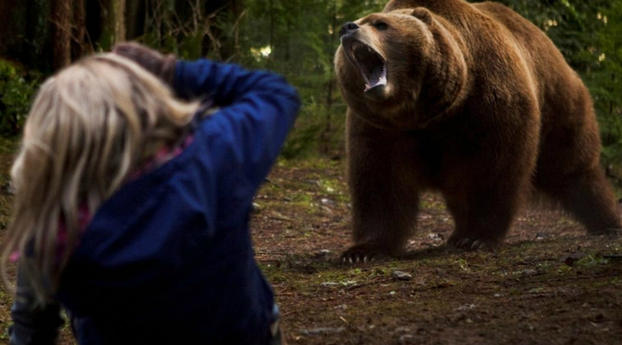 Зрительный контакт Зрительный контак животное однозначно воспримет как вызов. Это спровоцирует агрессию, поэтому не пытайтесь устроить игру в «гляделки» — для вас она закончится однозначно плохо. В то же время упускать медведя из виду тоже опасно: следите за зверем, чтобы понимать, что он предпримет в следующий момент.