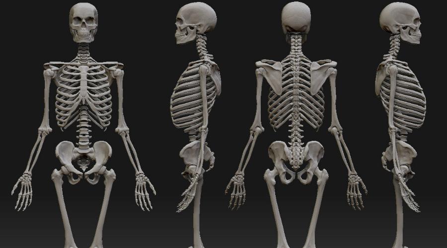 Суповой набор Купить полный скелет одного человека мог позволить себе только очень обеспеченный врач. Такой комплект стоил целых 800 долларов — немалая сумма для 1891 года. Все прочие были вынуждены довольствоваться так называемыми «суповыми наборами»: студенты-медики компоновали несколько разных скелетов в один. В качестве медицинского пособия такая поделка не годилась, но бедным врачам приходилось использовать и ее.