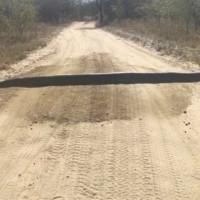 Водитель подумал на дороге лежит бревно, но оказалось, что это огромная змея