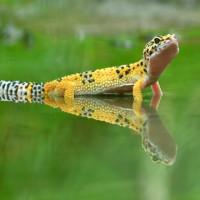 Отрастающий хвост ящериц: тайна, которая может дать нам шанс победить болезни
