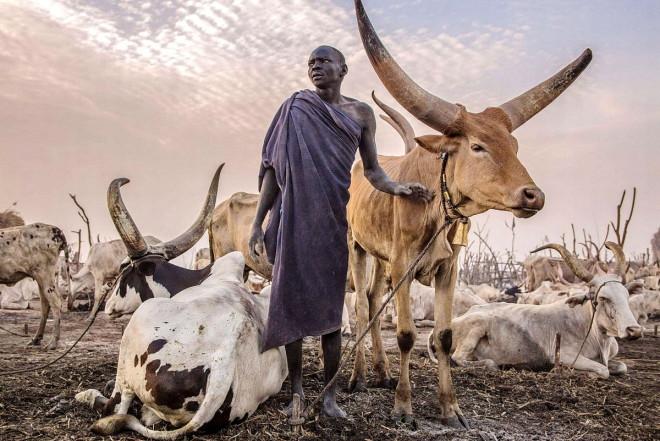 Уникальное племя Динка: они дают себе имена быков и используют коз вместо воды
