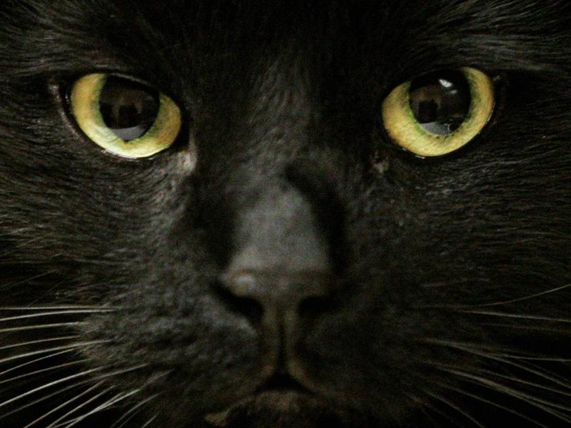Сжигание котов Маниакальное развлечение было распространено во Франции в 17-м веке. В этой жестокой практике участвовали все слои населения. Происходило это на массовых гуляниях и праздниках, в которых принимал участие весь город. Странный обряд исследователи связывают с колдовством — таким нехитрым образом французы пытались изгнать бесов из их поселений.