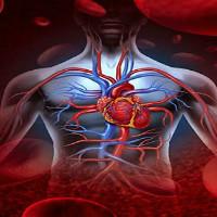 Как очистить артерии: простые способы восстановить здоровье