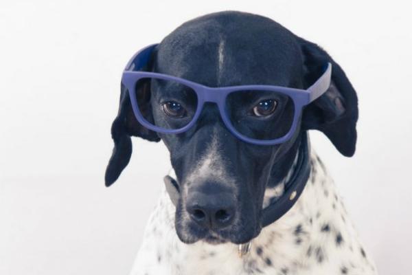 Как собаки видят нас на самом деле