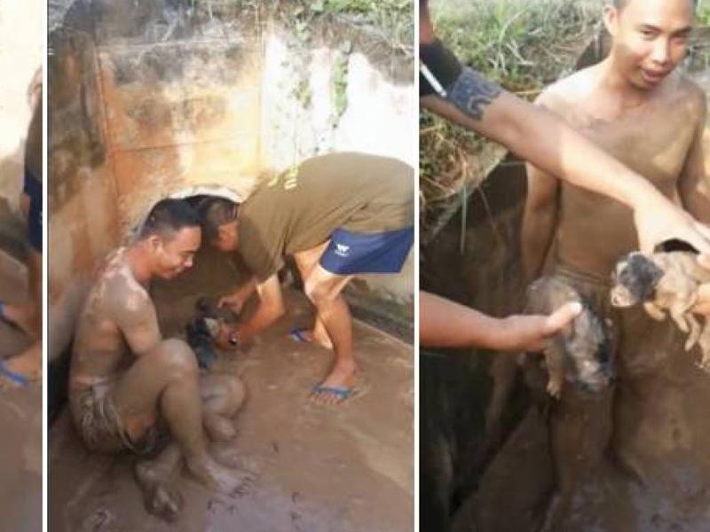 Щенки Услышав лай маленьких щенят, мужчина из Таиланда кинулся на помощь. Он пролез почти 100 метров в канализации, которая была полна отходами жизнедеятельности человека, и спас милых зверушек.