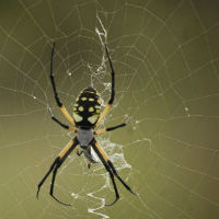 Почему пауков нельзя уничтожать дома