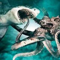 Схватка акулы с осьминогом: столкновение подводных монстров