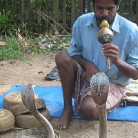 Как загипнотизировать змею, ящерицу и лягушку