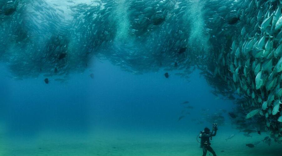 При чем здесь Большая голубая дыра Сведения о длительном периоде засухи ученые получили как раз на основе анализа пород из Большой голубой дыры. Как уже сказано выше, она представляет собой такую же карстовую воронку, что и прочие на полуострове Юкатан.