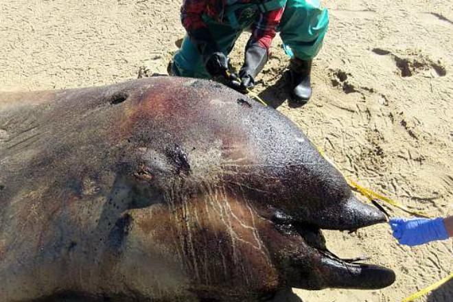 Рыбаки обнаружили странное огромное существо, которое выбросило на берег Намибии