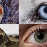 Как разные существа видят мир по сравнению с людьми