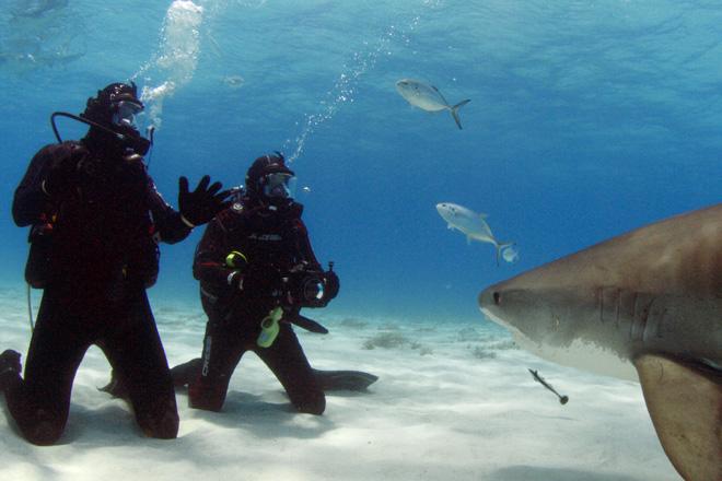 Сохраняйте хладнокровие Даже если вы заметили в воде акулу, а она заметила вас, есть шансы, что она проплывет мимо. Чтобы повысить их, нужно сохранять спокойствие. Паника и резкие движения могут спровоцировать хищника на нападение, ведь такое поведение характерно для раненого животного, а акулы любят легкую добычу. Привлечь их могут и усиленно вырабатываемые гормоны стресса, которые они прекрасно чувствуют. Также важно не преграждать акуле путь к открытому океану – она может посчитать это вызовом.