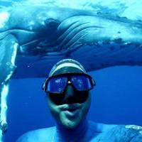 Дайвер нырнул и станцевал с голубым китом