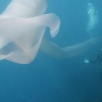 Дайверы Новой Зеландии столкнулись с 10-метровым подводным червем