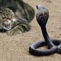 Кот в деле: домашний хищник против змеи и крокодила