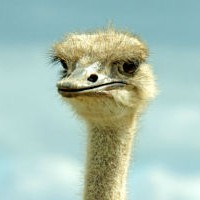Турист задирал страуса и получил урок