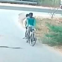 Кобра выползла на дорогу и погналась за велосипедом