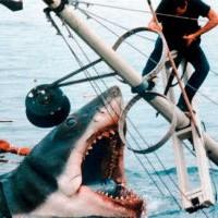Почему акулы нападают на корабли