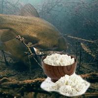Ловим рыбу на творог: подводная съемка
