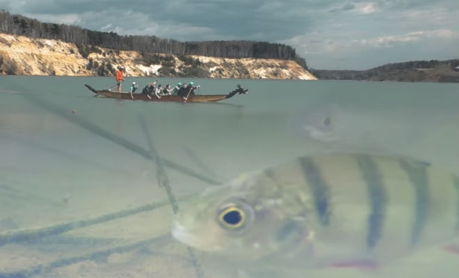 Ловим рыбу на валерьянку: подводная съемка