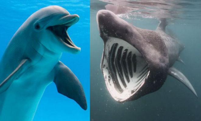 Почему акулы убегают от дельфинов
