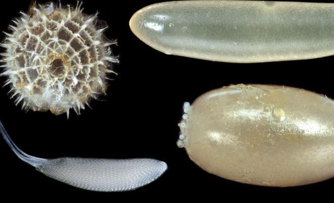 Все яйца птиц примерно одинаковы, но яйца насекомых показывают настоящее безумие природы