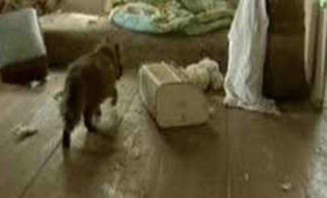 Живность Чернобыля: в деревнях и Саркофаге появились звери-мутанты
