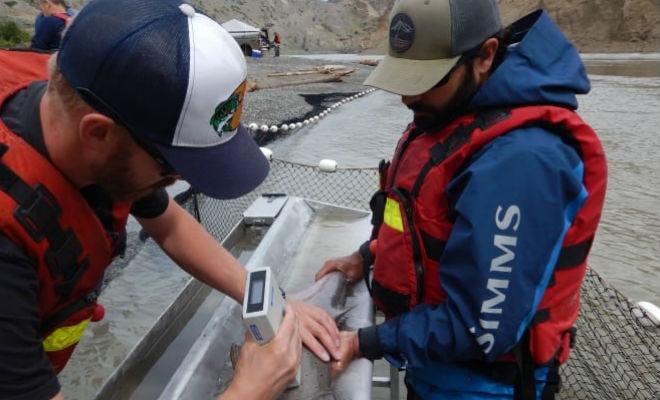 Огромная скала перегородила рыбе путь на нерест: люди пришли на помощь