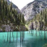 Древний лес ушел под воду: погружение в подводную чащу
