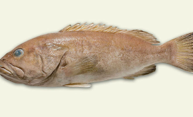 В океане случайно поймали неизвестную науке рыбу