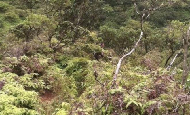Человек на необитаемом острове оставил одно фото и исчез